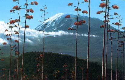 postcard-kilimanjaro2