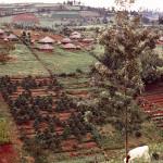Countryside in Kikuyu