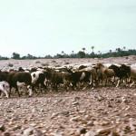 Pre-Sahara Pasture
