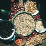 Zambia Village Crops