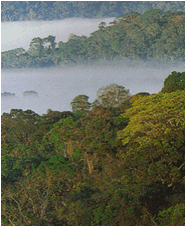 African Dense Rainforest