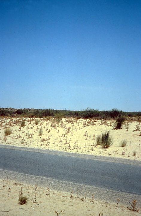 Algerian Desert Rocks