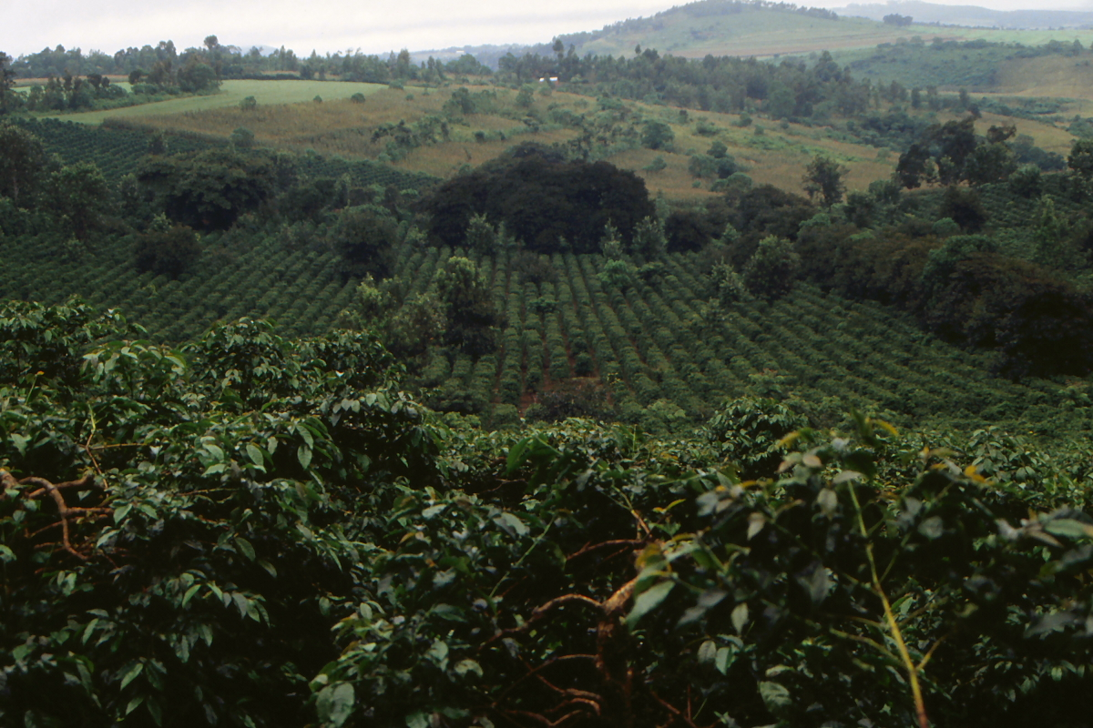 Crops in Tanzanias Highlands