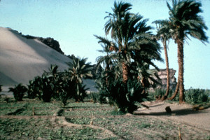 Desert and Agriculture Meet