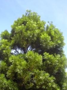 Flora of Ethiopia