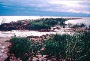 Hippos Lake Tanganyika