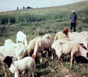 Moroccan Herders