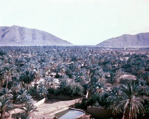 Oasis of Morocco