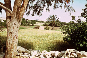 Tunisian Farm Field