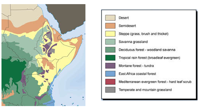 Vegetation of East Africa Map