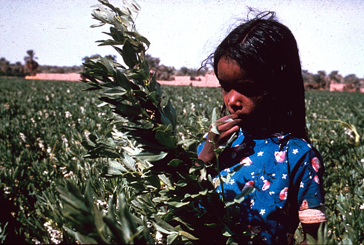 Young Girl Cotton Field