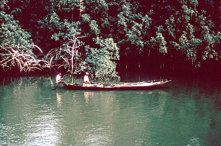 Mangrove Forest Calabar
