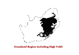 Grassland Region including high veldt
