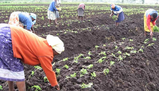 Women farmers in Zimbabwe