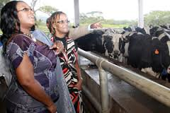 first lady dairy farm