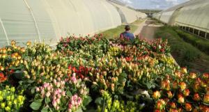 Flower Plantation